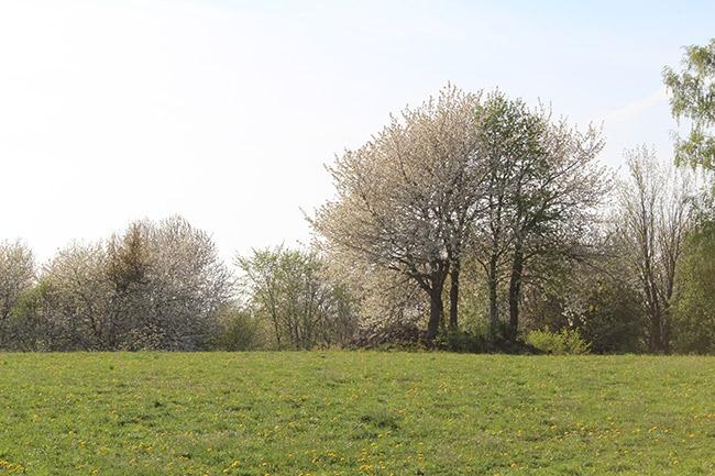 Eahagen---öglunda-ängar-naturreservat-Hagar