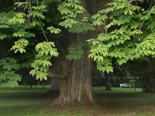 Hellekis-Säteri-Träd