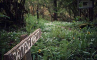 Naturreservatet Jättenekärret