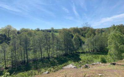 Körsbärsdalen – Humlamadens naturreservat