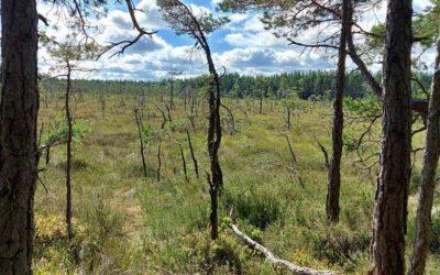 Store Mosse nationalpark – Värnamo